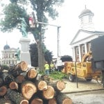 Landmark trees taken down
