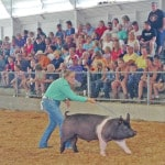 FFA members participate in barrow show