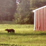 Wildlife officer says bear was in Highland Co.