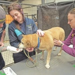 Seized dogs, cats surrendered