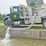 Trout stocked at RFL