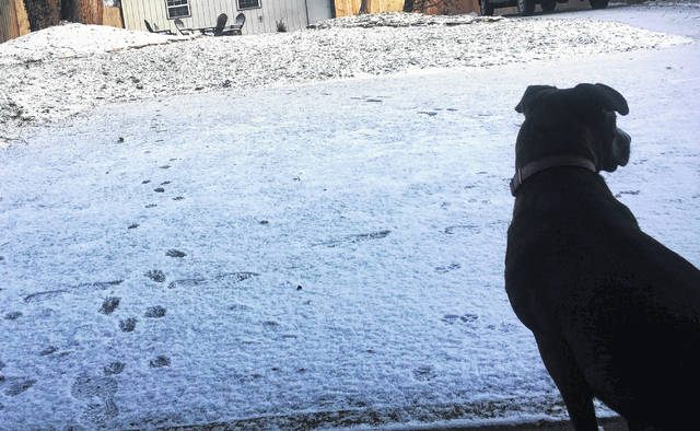 Pets are at risk during extremely cold weather, and experts advise pet owners to pay attention to signs of distress such as cracked paw pads or bleeding.