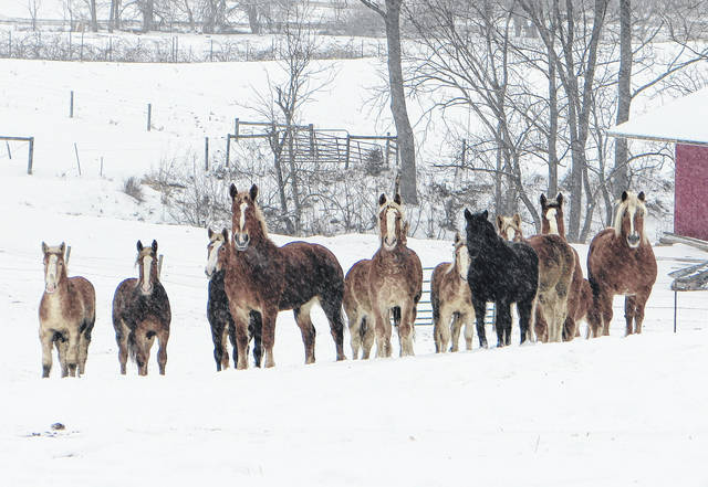 In the midst of a peaceful snowfall Monday afternoon, these horses stand alert in a pasture at the intersection of SR 138 and SR 771.