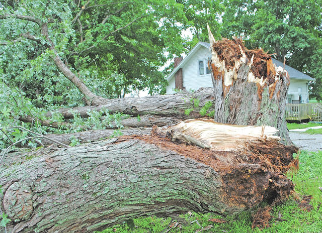 This tree at 8935 Careytown Road was one of several knocked down in the area during a late afternoon storm Thursday.