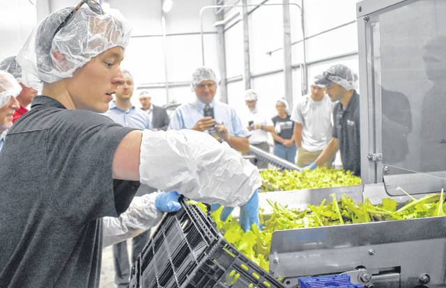Apprentice Grower Johnny O'Neal loads BrightFarms' first harvest during a special event on Friday.